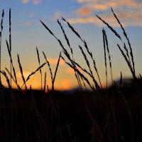 Закат в поле :: Лина Савина