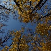 В небо :: марина давидовская