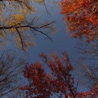 Буйство красок :: марина давидовская