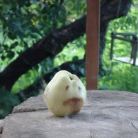 одинокое яблоко :: Фотиния М