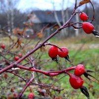 ...поздняя осень...из серии...Узоры русской деревни... :: Ира Егорова :)))
