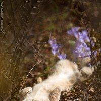 Осенний солнечный кот :: Анастасия Ласская