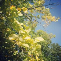 Осенние листья :: Максим Шумович