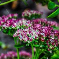 Осенние цветы :: Светлана