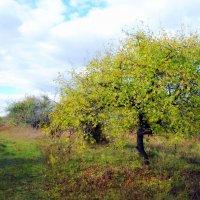 осень в саду :: Вячеслав Михеев
