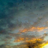Изумительный вечер октября - 2 :: Дарья Ашарина