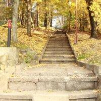 дорога в парк :: ЕЛЕНА W