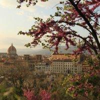 Firenze :: Mari Poluni