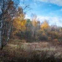 Краски осени :: Андрей Гусев