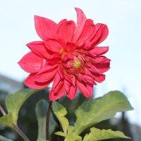 Цветок :: Владимир Поляков