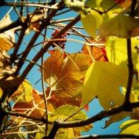 Золотая осень :: Алина Миняйло