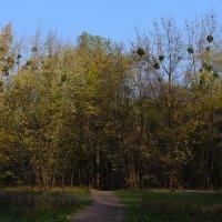 Осенний парк :: Дмитрий Гончаренко