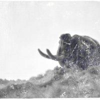 Единственный прижизненный снимок предпоследнего мамонта. :: Дмитрий Тилинин