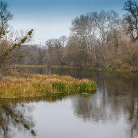 Осень на реке :: Сергей Приходько