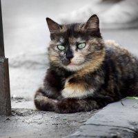 Родственница чеширского кота.. :: Ирина Лядова