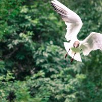 Чайка :: Andree Artemev