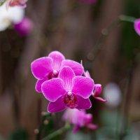 орхидея :: Валерий Цингауз