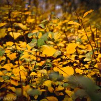 Желтое на холодном :: Константин Земсков