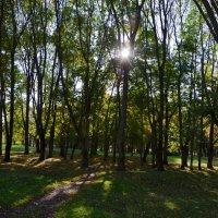 В кремлевском парке осенью (этюд 2) :: Константин Жирнов