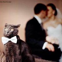 свадебный кот :: Ольга Калачева