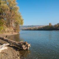 река Кубань. :: Геннадий Оробей