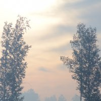 Туман :: Алена С