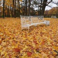 На ковре из желтых листьев... :: Марина Ильина
