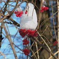 Зимние запасы , свежезамороженные :: Светлана Шестова