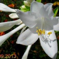 Цветы :: Андрей Бимов