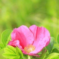 Flower :: Анна Кузнецова