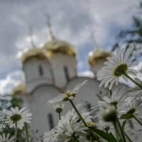 Через ромашки... :: Мария Миргородская