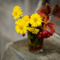 В красно желтых тонах :: Владимир Манин