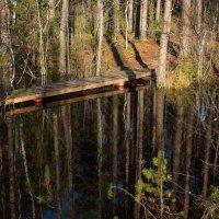Мостик в лесу :: Михаил Бреднев