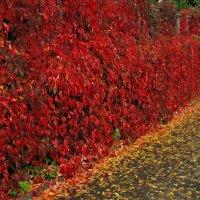 Осень :: максим лыков