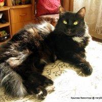 Солнечный кот :: Валентина Крылова