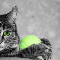 Кот... :: Вова Матвеев
