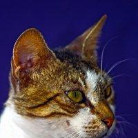 уличные коты мамка-из серии Кошки очарование мое! :: Shmual Hava Retro