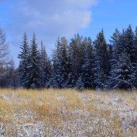 Первый снег, как первая любовь...Скорей всего растает, но с него начинается сказка... :: Светлана