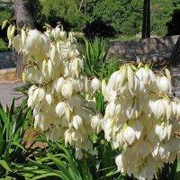 Белые цветы :: Ростислав