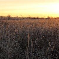 утро в поле :: Sergey Ganja