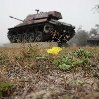 Война и Мир :: Игорь K