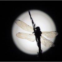 Лунная стрекоза на фоне луны ... :: LValentin Prokofiev