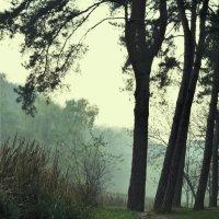 туман :: Lili Davidenko
