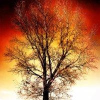 Дерево в огне :: Анна Бурсова