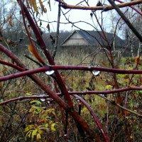 ...ну, очень поздняя осень!...из серии..Узоры русской деревни... :: Ира Егорова :)))