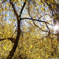 Золотые лучики солнца :: Ксения Мифэйр