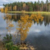 Золотая осень :: Валерий Смирнов