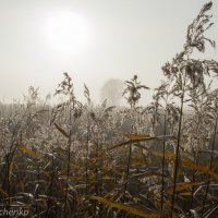 Туман. :: Виктор Лавриченко