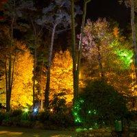 лес :: Ёма Бедой
