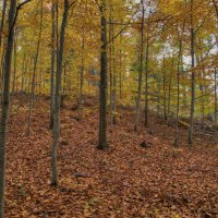 Осень :: Андрей Морозов